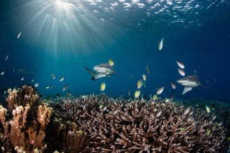 Beautiful healthy coral reefs.