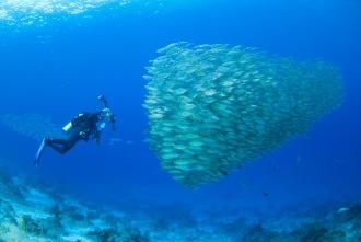 Underwater Photographers paradise.