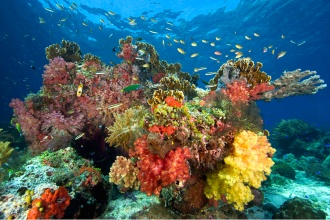 Colorful coral reefs.