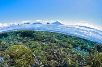 Pristine Coral Reefs.