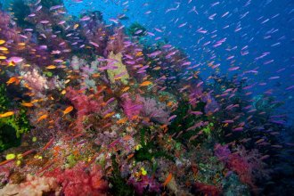 Colorful reefs.