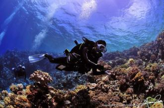 House Reef Diving.