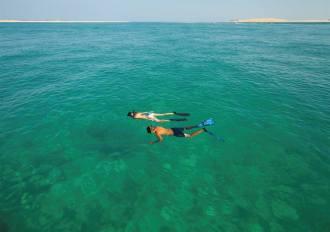 Snorkel or dive.