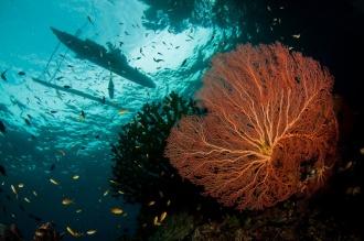 Stunning Reefs.
