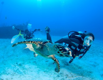 Diver and Turtle.