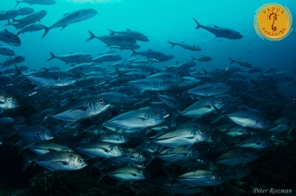 amazing underwater bio-diversity.