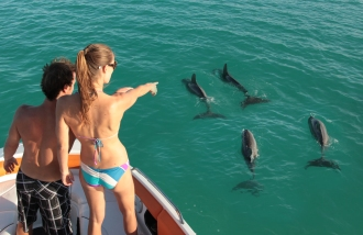 Dolphins are regular visitors to the reef.