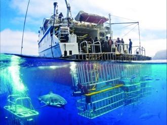 Purpose Built for Shark Encounters.