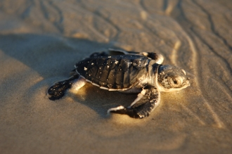 Turtles seen in and out of the water.