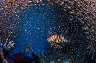Lion Fish and Glass Fish.