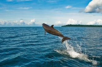 Dolphins seen en route to dive site.