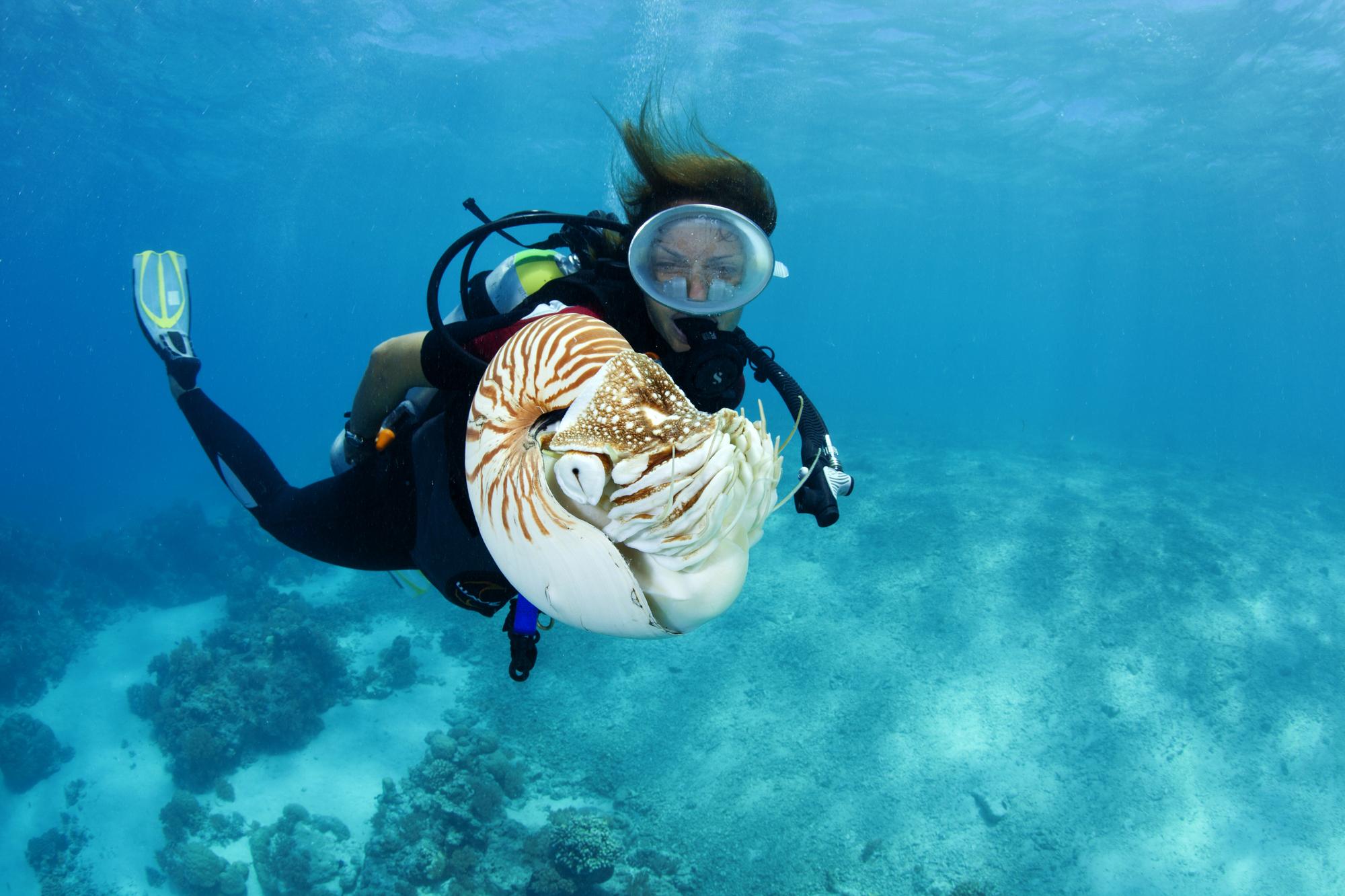 Palau Siren Liveaboard Faces Of The Sea Scuba Holidays