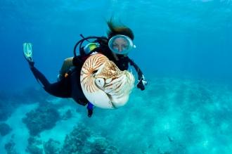 Nautilus.