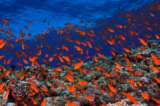 Vibrant colors all over the reef.