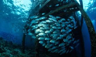 Pier diving.
