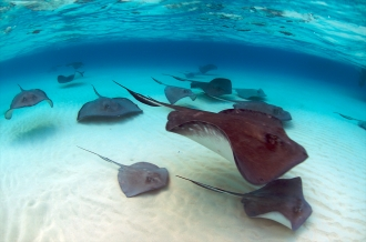 Sting Ray City.