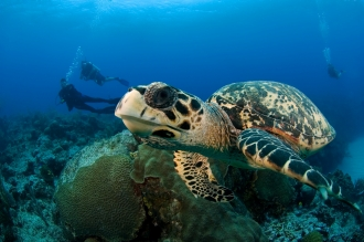 Turtles seen regularly.
