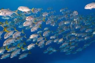 stunning visibility together with great marine life.