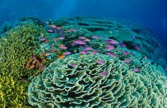 Hard Coral Garden.