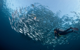 Large Fish Shoals are common in the Andaman Islands
