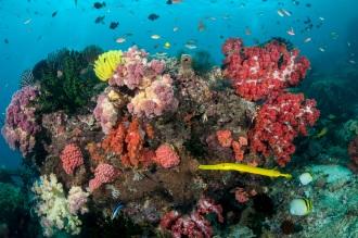 Rich Reefs.