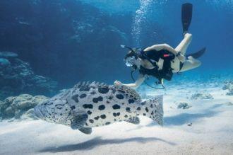 Diver and Potato Cod.